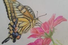 Watercolour Butterfly