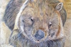 Wombat, not for sale.
